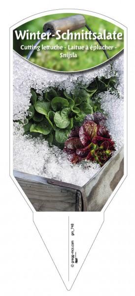 Winter-Schnittsalate