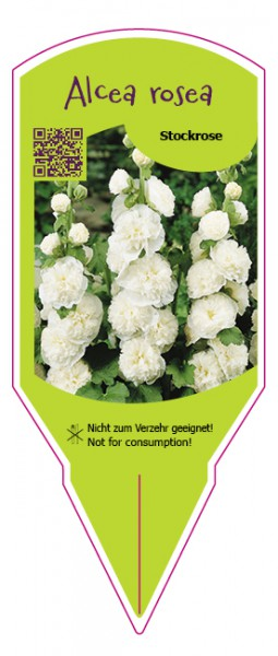 Alcea rosea weiß