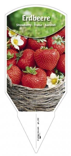 Erdbeere weiss bluehend