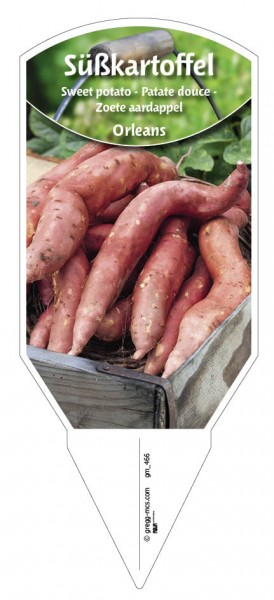 Süßkartoffel 'Orleans'