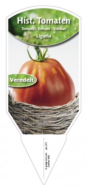 Tomaten, Historische Liguria veredelt