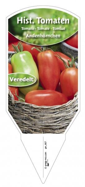 Tomaten, Historische Andenhörnchen veredelt