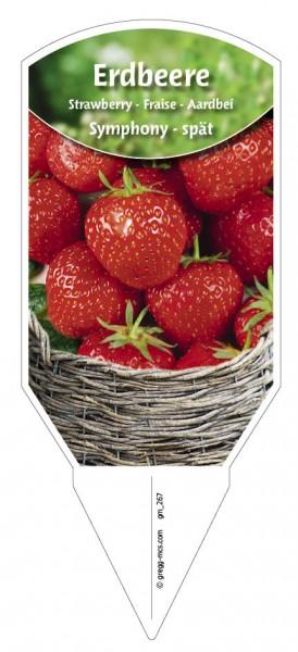 """Erdbeere """"Symphony"""""""