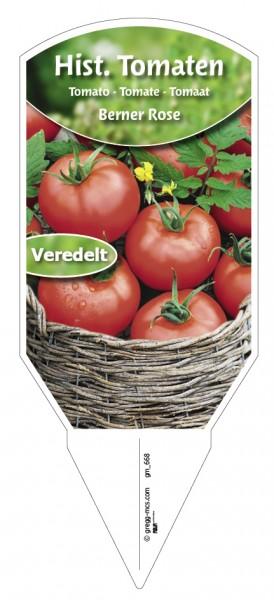 Tomaten, Historische Berner Rose veredelt