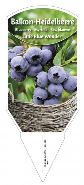 Heidelbeere 'LITTLE BLUE WONDER®'