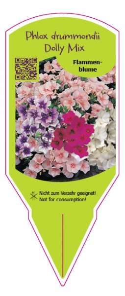 Phlox drummondii Dolly Mix