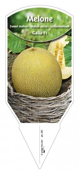 Melone 'Galia F1'