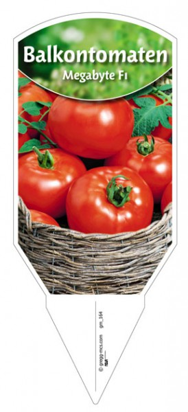 Tomaten, Salat- 'Megabyte'