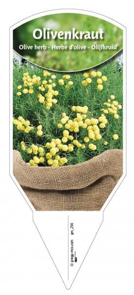 Olivenkraut