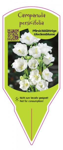 Campanula persicifolia weiß