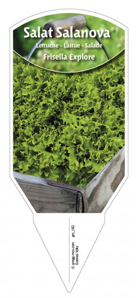 "Salat Salanova ""Frisella Explore"""