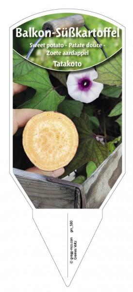 Balkon-Süßkartoffel Takatoto