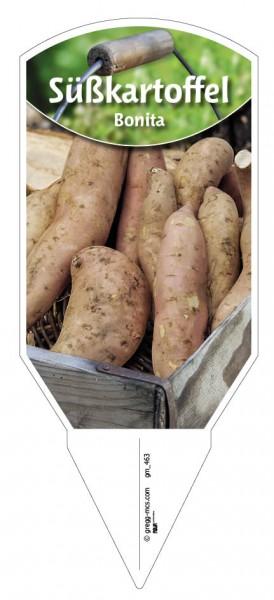 Süßkartoffel 'Bonita'