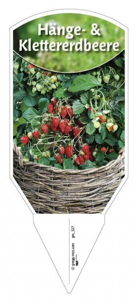 Klettererdbeere